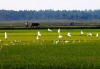 Chuẩn bị giống lúa mới & cây trồng thích nghi